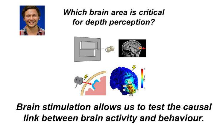 Which brain area is critical for depth perception?