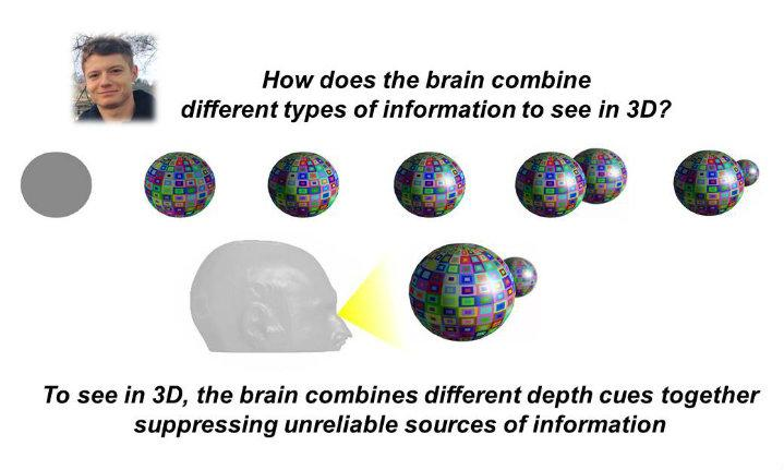 How does the brain combine different types of information to see in 3D?