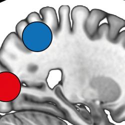 image of brain regions for cerebral cortex paper 2021